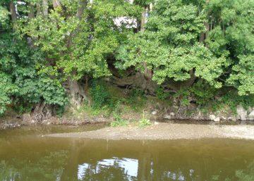 Ripisylve, un milieu rencontre sur le circuit didactique au fil de l'eau à Durbuy