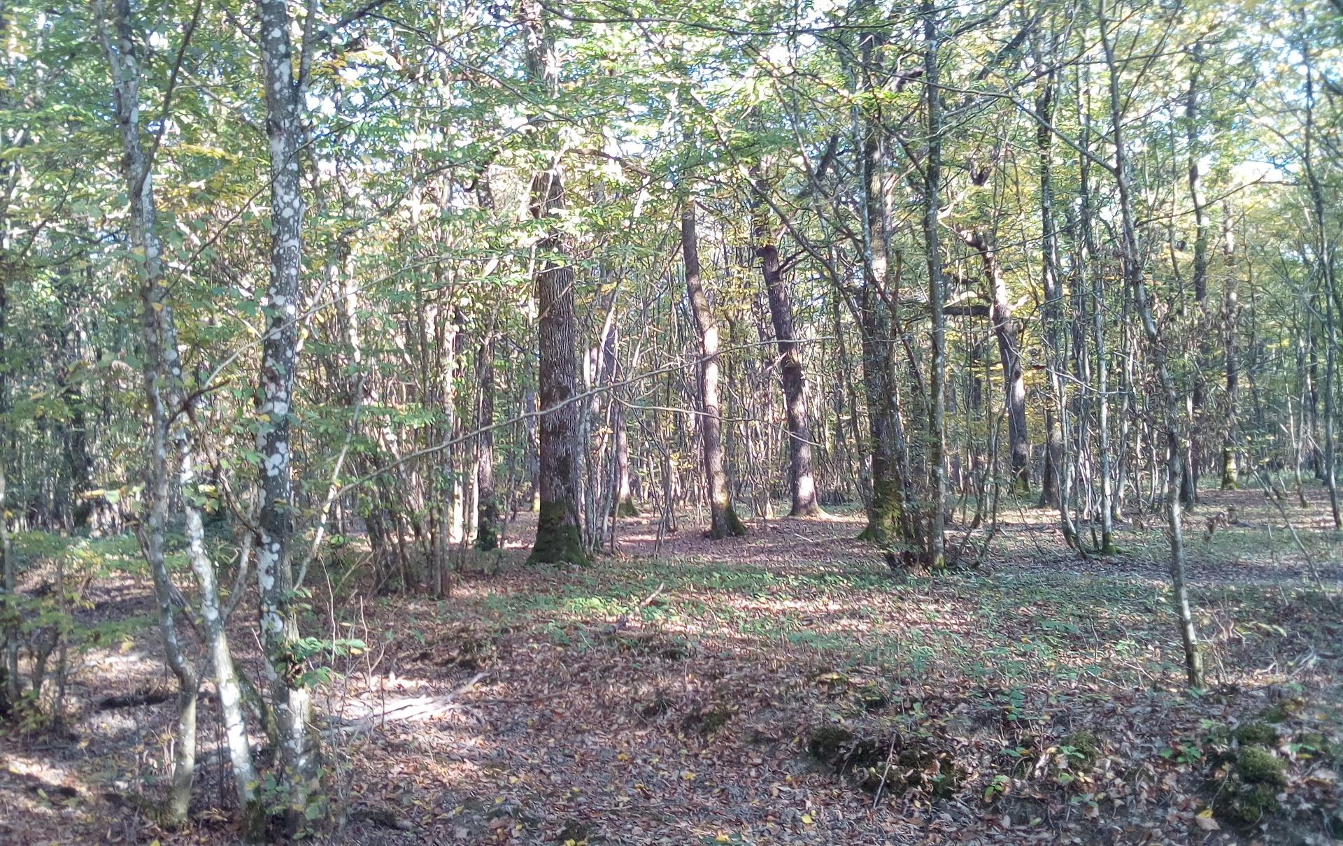 forêt rencontrée au cours de la randonnée pédestre Famenne au départ de Barvaux
