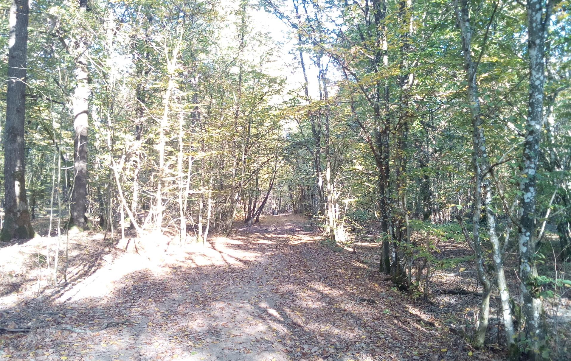 Chemin de la promenade vers le chêne à l'image, dans le bois de Petithan
