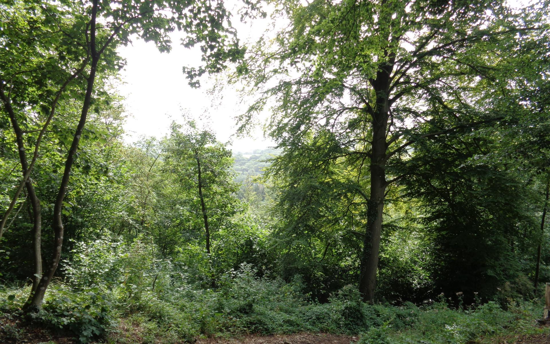 Sur le mont des pins, paysage vers Bomal