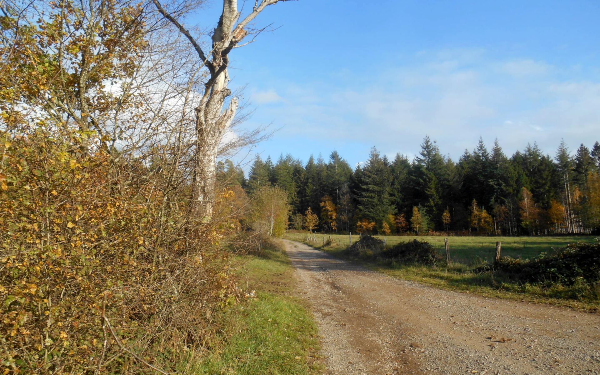 Chemin du circuit VTT la ronde des mégalithes autour de Weris