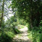 chemin du circuit VTT Plateau d'Herbet