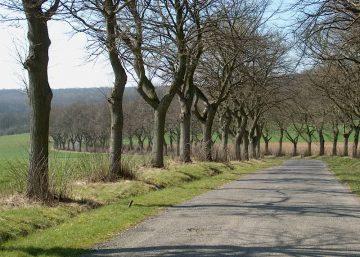 Vallée du Néblon, circuit VTT aux confins de la commune de Durbuy, l'allée du centenaire